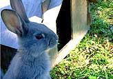 Kaninchenstall Hasenstall Bauanleitung